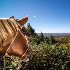 Horseback - Mont Tremblant