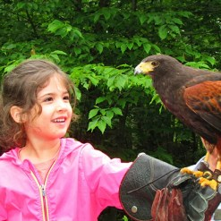 Birds of Prey - Mont Tremblant