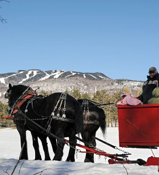 Horse drawn sleigh ride - Mont Tremblant