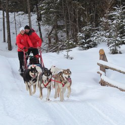 Dogsledding - Mont Tremblant