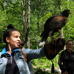Birds of Prey - Mont-Tremblant