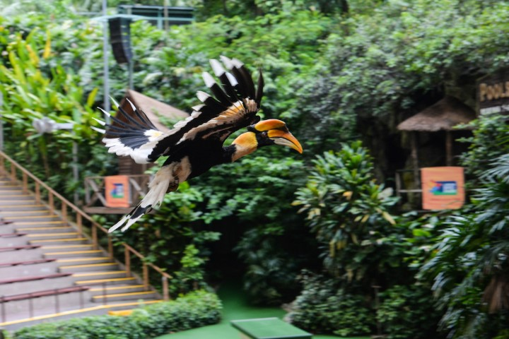 sunny-the-great-hornbill-is-jbps-animal-icon