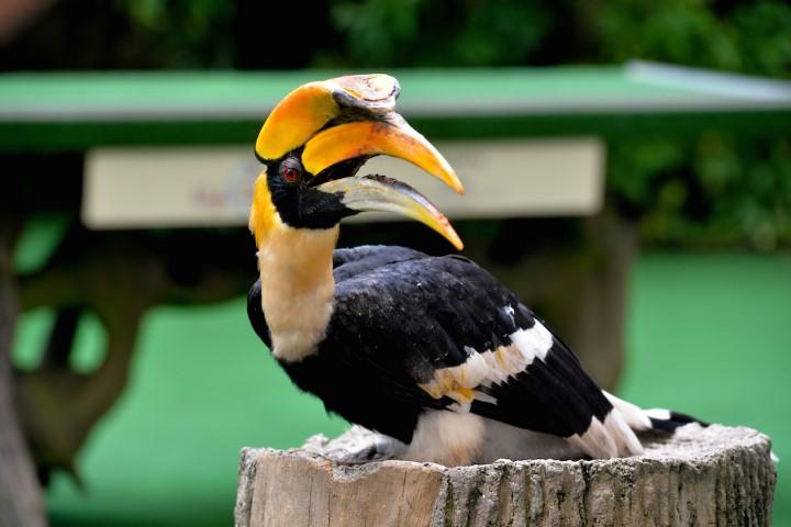 sunny-the-hornbil-jbps-animal-icon-perching-prettily