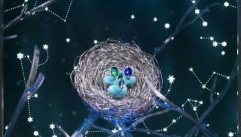 Bird's-Nest,-Tiffany_4876-min