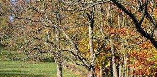 Jak bielić drzewa owocowe wapnem