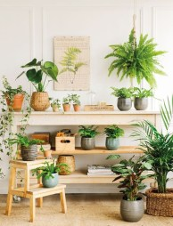 Beautiful Plant Decors For Your House 13