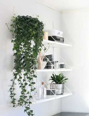 Beautiful Plant Decors For Your House 35
