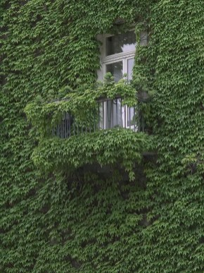 Beautiful Facades With Vines And Climbers 19