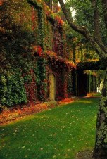 Beautiful Facades With Vines And Climbers 36