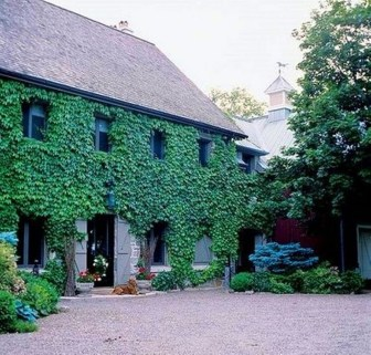 Beautiful Facades With Vines And Climbers 44