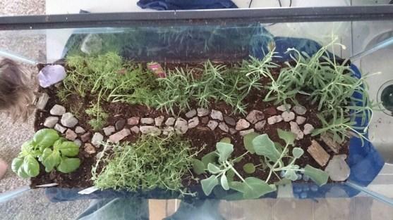 Magnificient Diy Fairy Garden Ideas With Plants 18