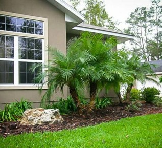 Cute Palm Gardening Ideas For Front Yard 07