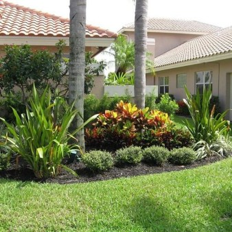 Cute Palm Gardening Ideas For Front Yard 09