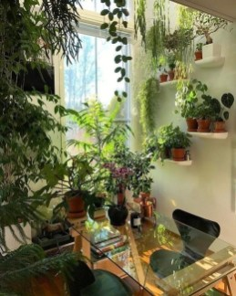 Magnificient Indoor Decorative Ideas With Plants 14