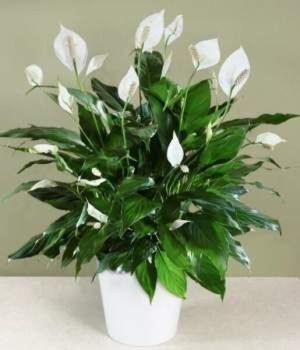 Magnificient Indoor Decorative Ideas With Plants 15