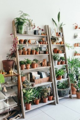 Magnificient Indoor Decorative Ideas With Plants 35