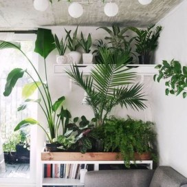 Magnificient Indoor Decorative Ideas With Plants 47