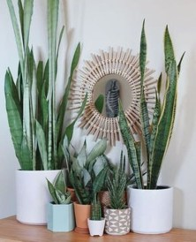 Magnificient Indoor Decorative Ideas With Plants 52