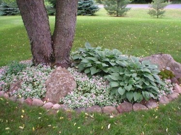 Adorable Flower Beds Ideas Around Trees To Beautify Your Yard 14