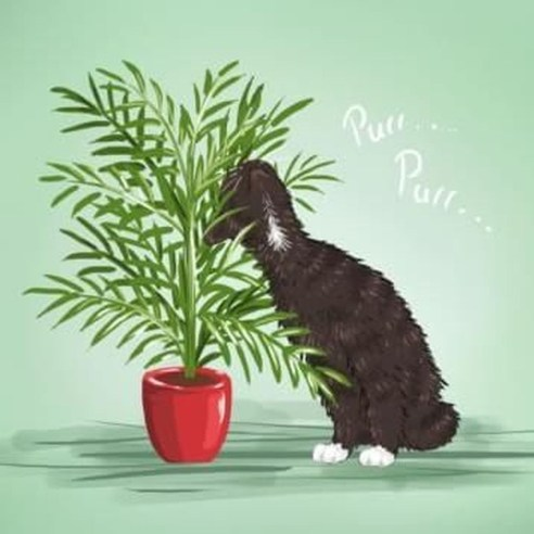 Rustic Houseplants Design Ideas That Are Safe For Animals 07