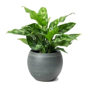 Rustic Houseplants Design Ideas That Are Safe For Animals 29