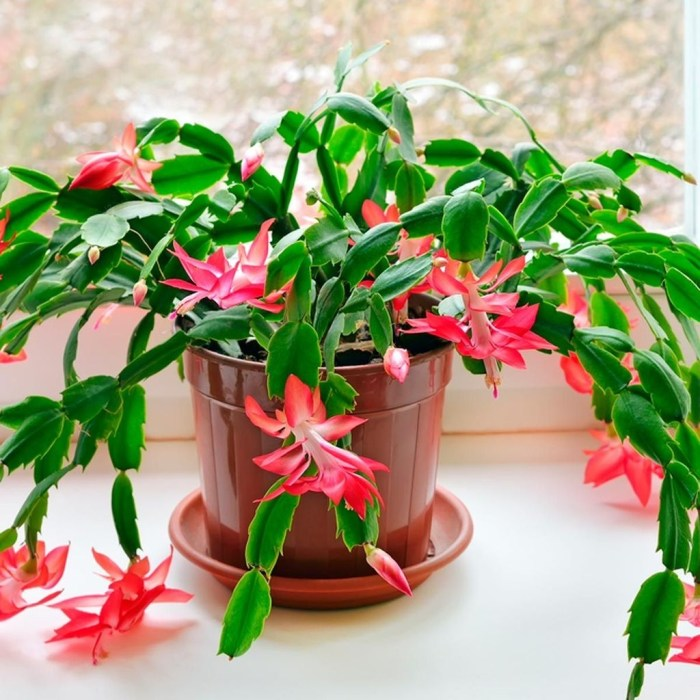 Rustic Houseplants Design Ideas That Are Safe For Animals 41