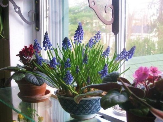 Lovely Window Design Ideas With Plants That Make Your Home Cozy 21