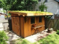 Awesome Shed Garden Plants Ideas25