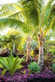 Wonderful Tropical Landscaping Ideas For Garden22