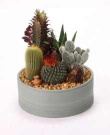 Cool Small Cactus Ideas For Interior Home Design02