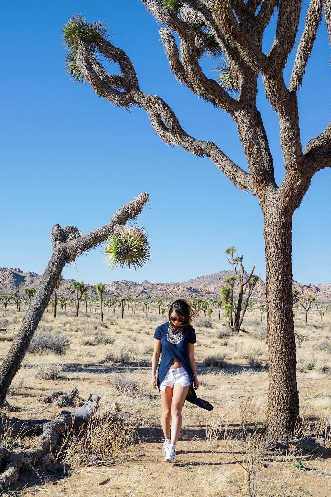 APPRECIATING JOSHUA TREE – TREND ENVY