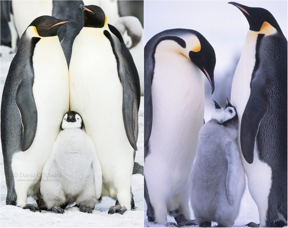 20 Pictures That Prove Penguins Are The Cutest Animals On