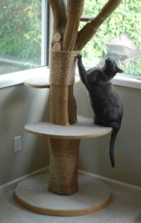 Tree Branch Is Transformed Into Something Your Cats Will Love