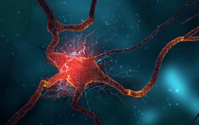 Adult Neurons 77