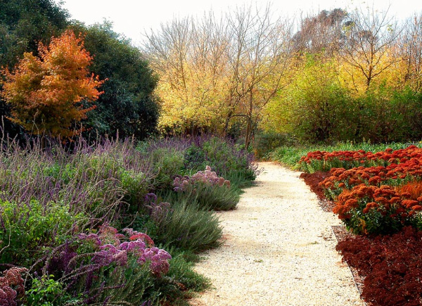 Drought Tolerant Garden Design by Eckersley Garden