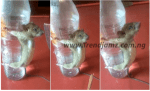 News: Man Ties Up Rat And Flogs It After Chewing His Phone Charger (Photos)