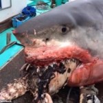 News: Giant Shark Chokes To Death While Trying To Swallow A Turtle (Photos)