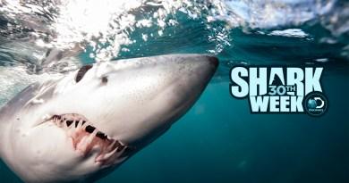 where to watch shark week 2018 online