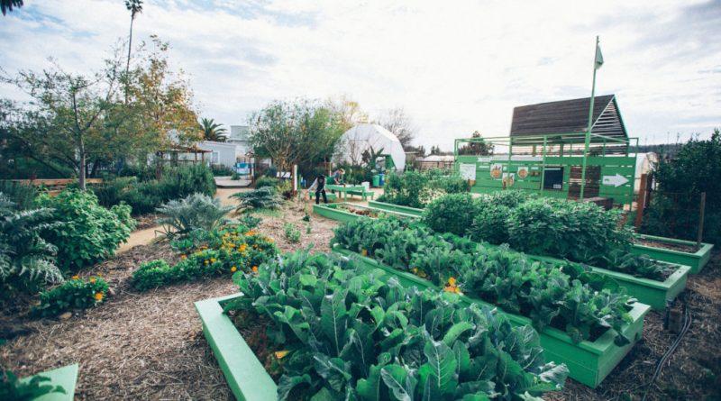 Benefits of Involving in Organic Gardening
