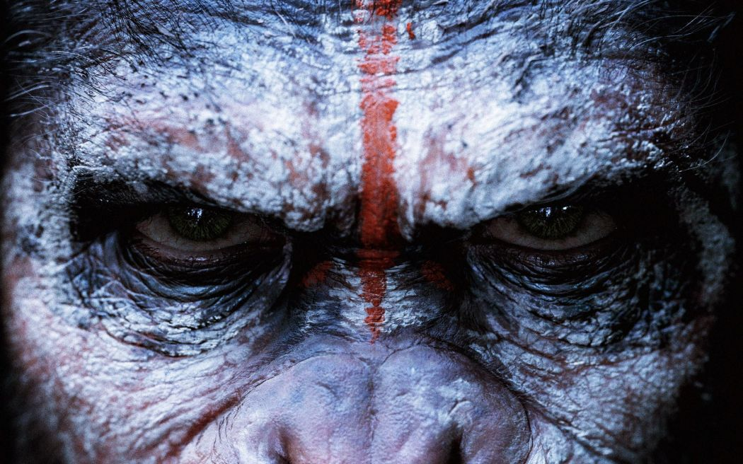Dawn-Of-The-Planet-Of-The-Apes-Face-Wallpaper