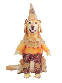 Scarecrow Dog Costumes | DoggieChecks.com