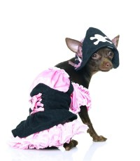 Treasure Pirate Dog 2pc Costume