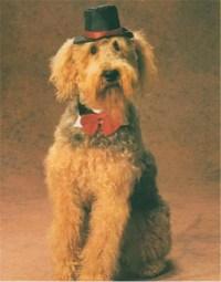 Dapper Dog Pet Costume