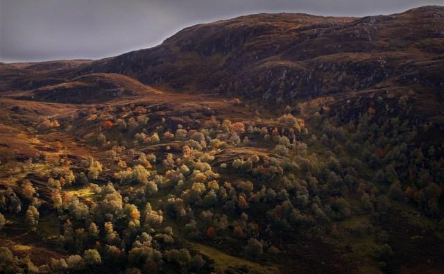 Scotland Crimson669 8