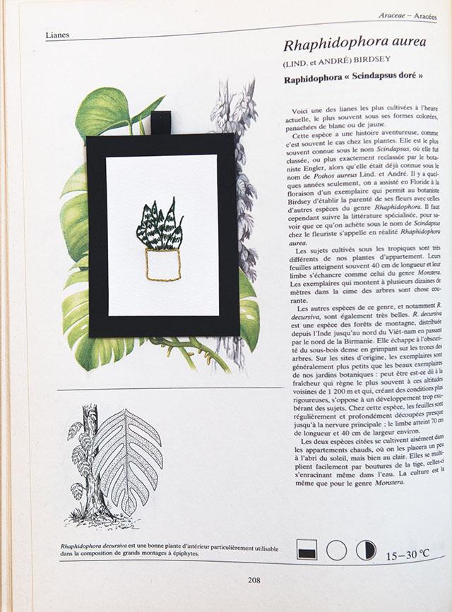 Cactus - 1967 Broderies