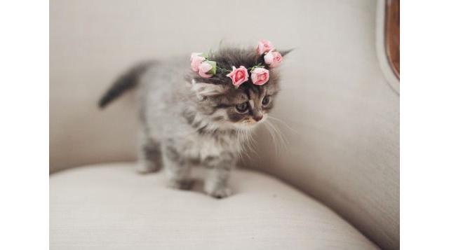 Flower Crown - Kitten