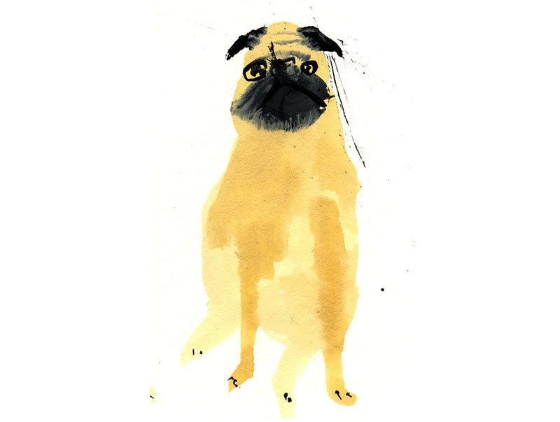 Faye Moorhouse - Pet Portraits 3
