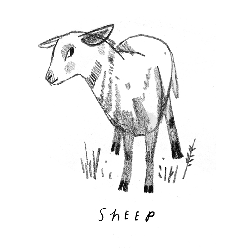 Rebecca Green - Sheep