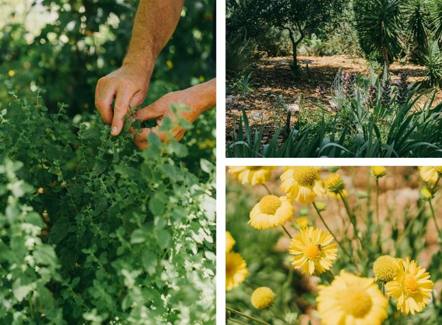 Jardin-Sanoflore-Fleurs