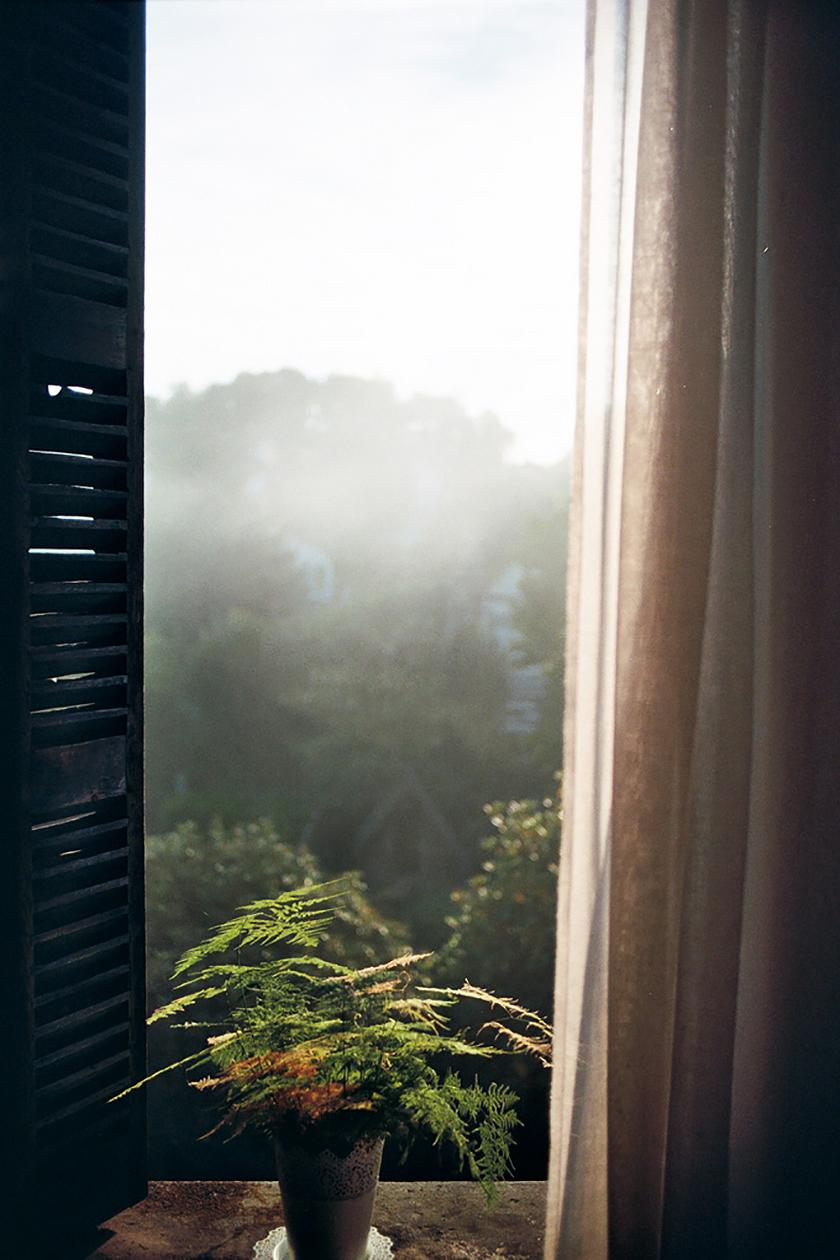 Fenêtre sur une forêt